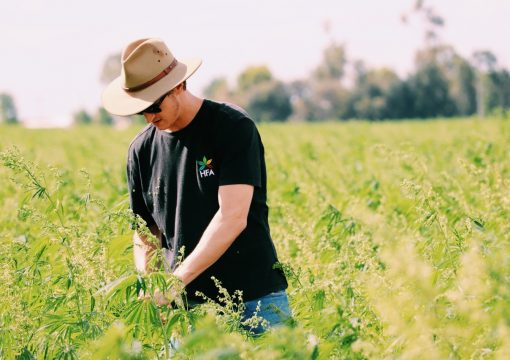 How Hemp Is Changing The Agricultural Industry